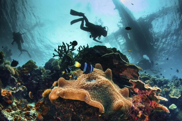 Diving among the reef and marine life