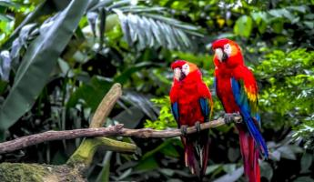 Macaw in the jungle